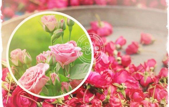 Розовые лепестки в народной